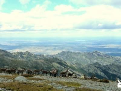 Cuerda Larga - Miraflores de la Sierra; hoces de beteta arbol el tejo garganta divina del cares